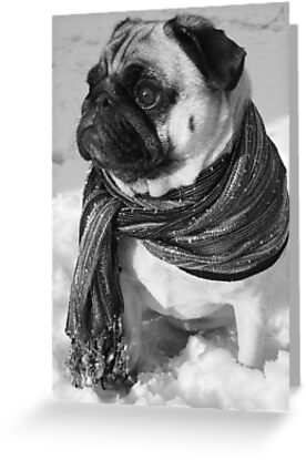 Snow Pug by Bekah Reist
