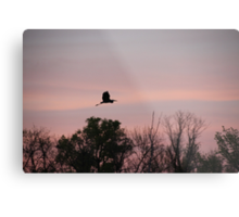 Great Blue Heron on Pink Sky Metal Print