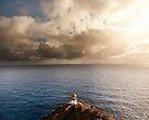 9:30 AM Hawaii Time by Alex Preiss