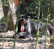 Jaguar Black  by Mdillon