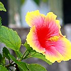 A specie of Hibiscus Rosa-senensis Linn. by JhaMesPhotos