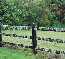 Mossy fence - West Coast New Zealand by Julie Sherlock