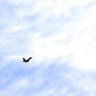 One Bird, One Flight, One Purpose, One World by Scott Mitchell
