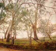 Country Mist - Monkhouse Rd, Nairne, Adelaide Hills, SA by Mark Richards