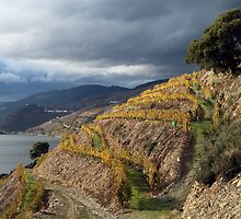 Alto Douro wine region, in Portugal by Cláudia Fernandes