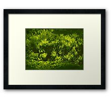 Ferns on the March bank Framed Print