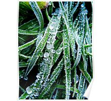 Ice Grass Poster