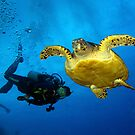 Dancing With Sea Turtles by A.M. Ruttle