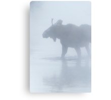 Bull Moose in Winter Steam Canvas Print