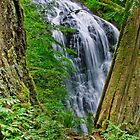 Waterfall and Green Vegetation Framed by Trees by Jeff Goulden
