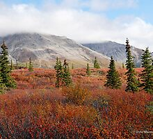 Denali in all her Splendor by Dyle Warren