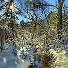 &quot; Snow, Sun, and Shadows&quot; by Diana Graves Photography