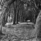 Phoenix Park Trees [near the school], Dublin by Dave  Kennedy