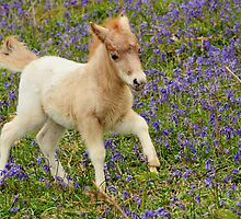Galloping Foal by jonshort58