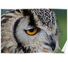 Indian Eagle Owl Poster