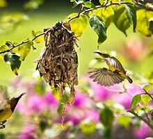 Nesting by Dean Mullin
