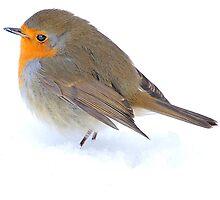 Winter beauty by Alan Mattison