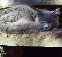 Katty by Danyaelv8