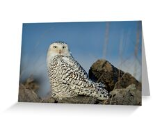 Owl at Amherst Greeting Card
