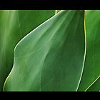 Agave Leaves 1 by Tess Buckler