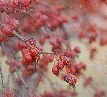 Winter Fruits by Marilyn Cornwell
