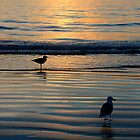 Seagulls @ Sunset by tom j deters