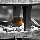 Lonley Little Red Robin by CalumCJL