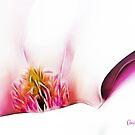 Abstract Magnolia by Anita Pollak