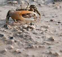 Crab by luissantos84