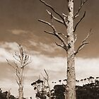 Dead Gum Trees by Ross Campbell
