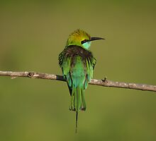 Bird, Yala National Park, Sri Lanka by Derek  Rogers