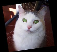 Green Eyes by Ginny Schmidt