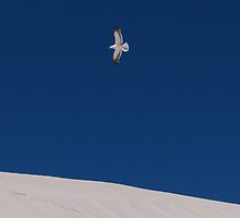 Dune and Sea Gull by stephen foote