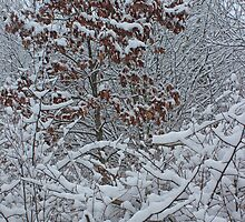 Snowy Forest 12 by marybedy