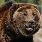 Smiling Bear by RedOwlPhoto