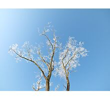 The sun is shining, the sky is blue.... Photographic Print