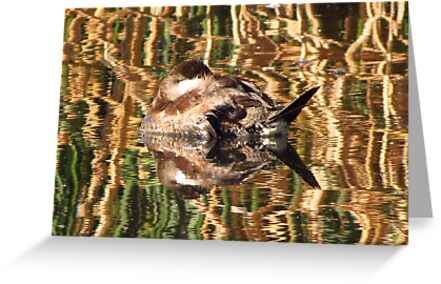 Ruddy Duck ~ Reflection Dreams by Kimberly Chadwick
