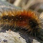 Hairy Caterpillar with small fly. by Esther's Art and Photography