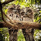 Frogmouth Twins by onemistymoo