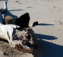 Driftwood on the Beach by North22Gallery