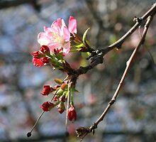 Spring flowers opening by honeyandollie