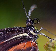 bejewelled butterfly in the mist by Iris Mackenzie