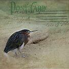 Green Heron Postcard by Lynn Starner