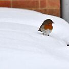 Robin in the Snow by Durotriges