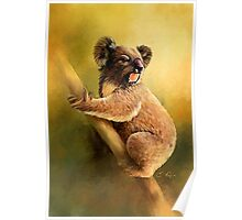 Sitting Koala Poster