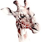Giraffe Portrait by Debbie Jew