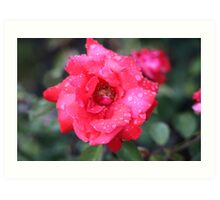Red Flower Art Print