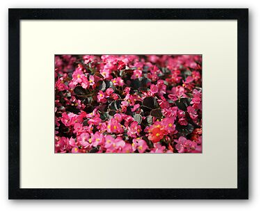 Pink Flowers by Thomas Murphy