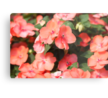 Peach Colored Flowers Metal Print