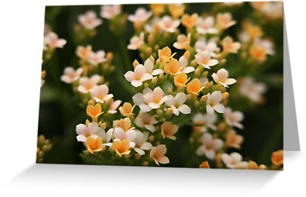 Yellow and White Flowers by Thomas Murphy